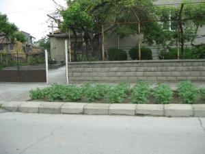Bulgaria - Street+potatoes