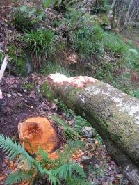 knapdale beaver signs