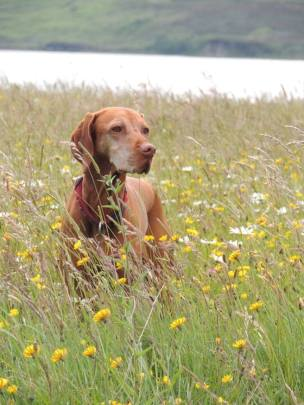 Tikka and wild flower meadow