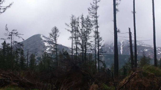 slovakia-high-tatras-forest-damage
