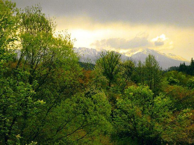 slovakia-low-tatras-forest