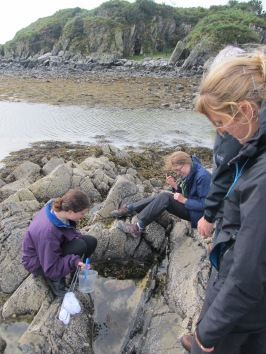 Having a look in the rockpools