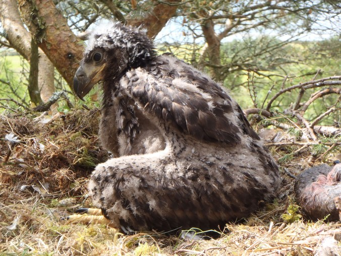 Ringers Pic of our Chick